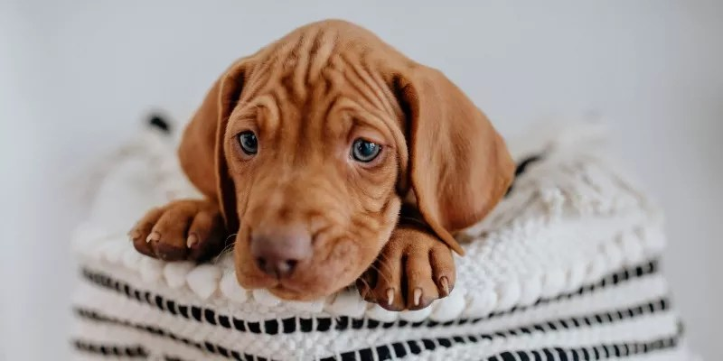 Things to Consider When Choosing Puppy Clothes
