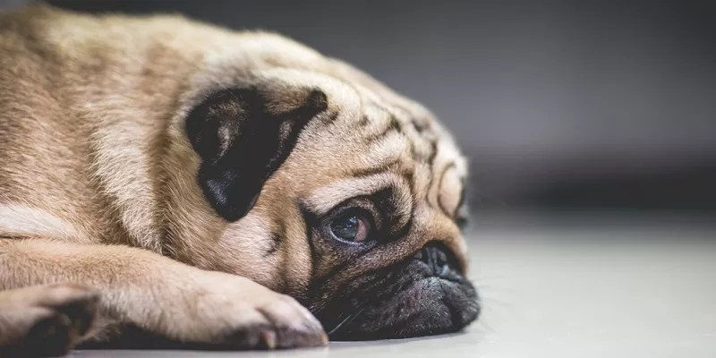 What You Should Do to Help Your Stressed Dog