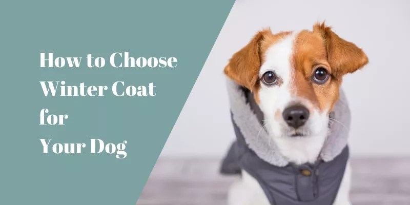 How to Choose A Great Winter Coat for Your Dog