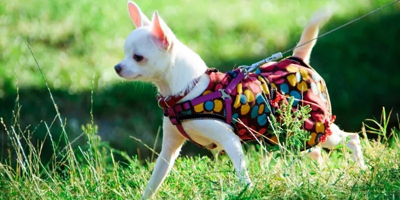 Things to Consider When Choosing Dog Clothes