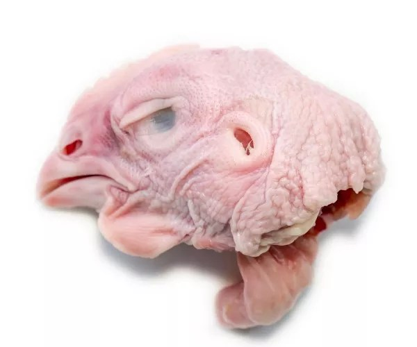 Can A Chicken Survive Without Its Head