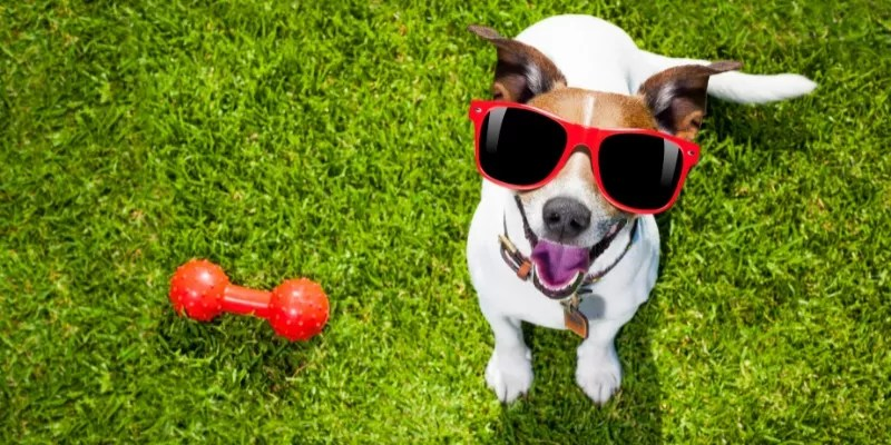 Choose the Right Dog Toys for Your Pet