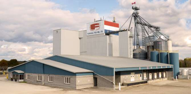 7 Excellent Strategic Steps How to Start a Poultry Feed Mill Business