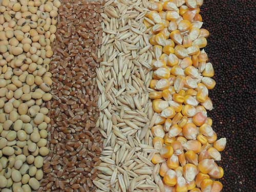 Poultry Feed Formulation Ingredients Used
