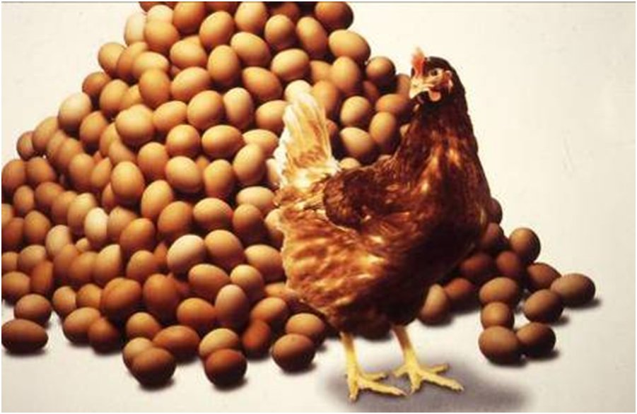 poultry egg production