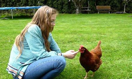 5 Awesome Reasons Why You Should Keep Chickens As Pets in 2020