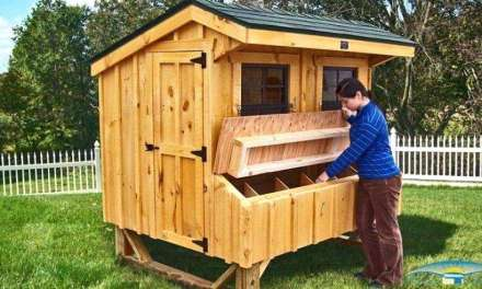 How To Design A Good Chicken Coop