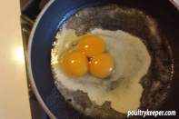 Triple Yolk Egg