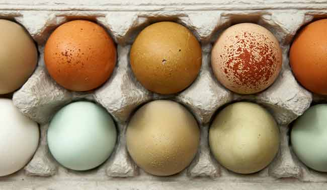 Coloured-Eggs-on-Tray