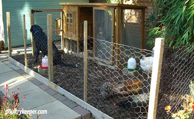 Chicken-Run-small-space