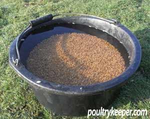 wheat in bucket of water