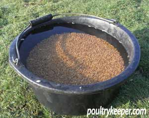 wheat in bucket of water