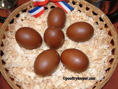 Blown Marans Eggs