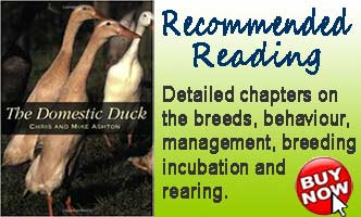 The Domestic Duck Book Advert