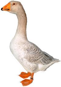 Steinbacher Goose