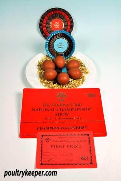 Dark Cuckoo Marans Eggs