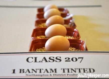 Tinted Bantam Eggs