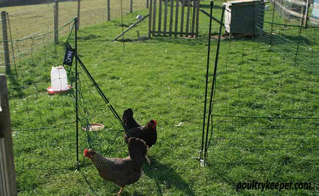 Omlet Chicken Netting Gate