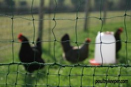 Omlet Chicken Netting Kit
