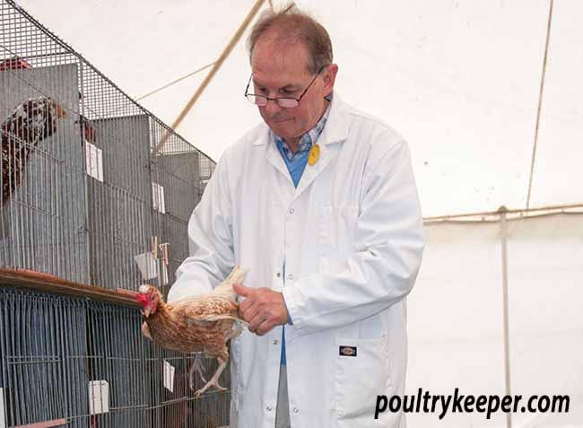 Poultry Judge Huw Evans