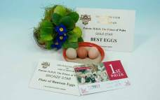 Best Eggs at the National 2015