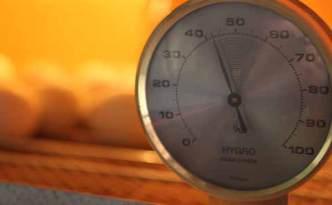 Incubation Humidity