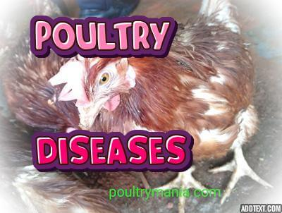 POULTRY DISEASE
