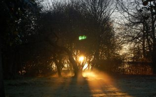 sunset-through-trees-garden-poundon-house