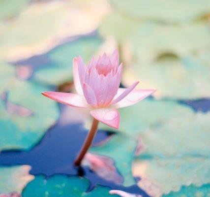 3 habitudes indispensables pour être zen au quotidien