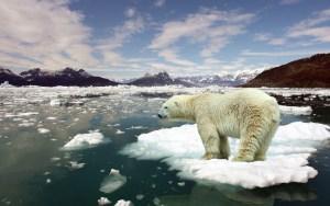 Arctique : première victime du réchauffement climatique