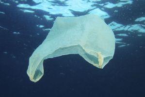 Les sacs plastiques entraînent affectent durablement la biodiversité marine