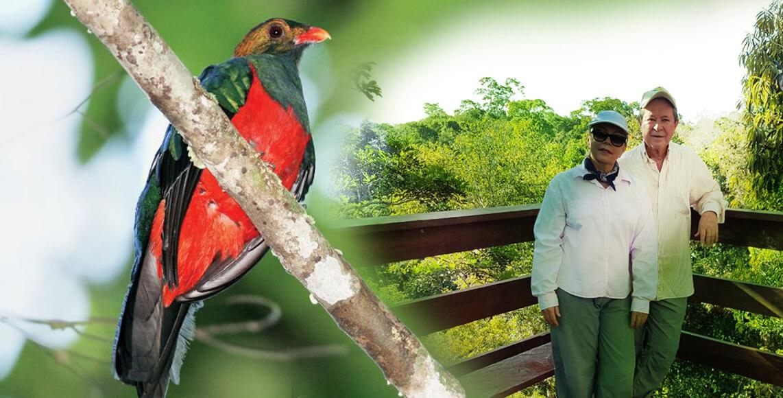 Deslumbrar La Belleza De Las Aves Del Río Roosevelt