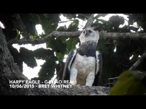 The Harpy's Flight