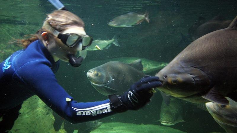 aquario-do-guaruja-acqua-mundo-mergulho