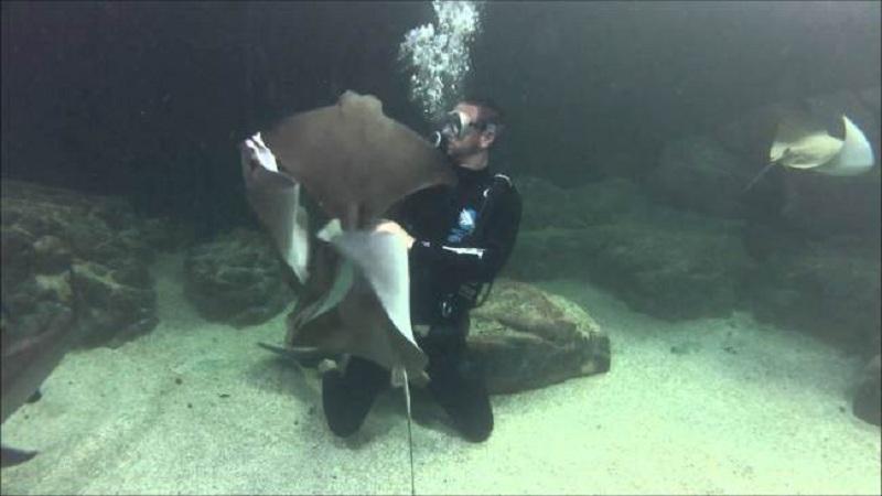 araia aquario guaruja Acquamundo