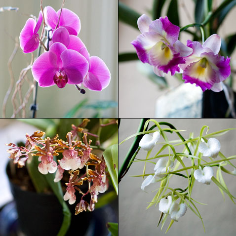 four-orchids.jpg