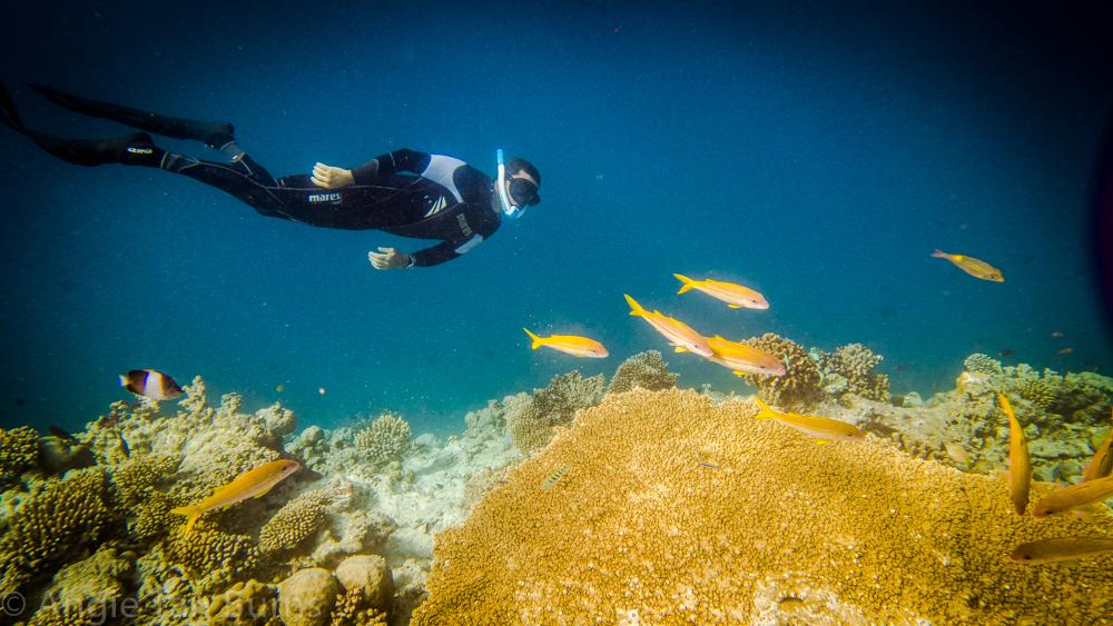 powerbreather snorkelling freediving