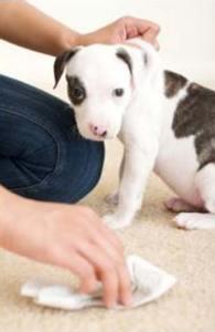 pet-odor-stain-removal-tile-cleaning-grout-albuquerque-rio-rancho-corrales-placitas-albuq-abq