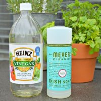 Safe Herbicides Lawns im home