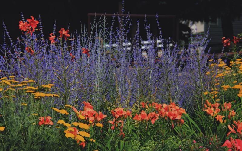 Secrist Gardens Perennial Beds