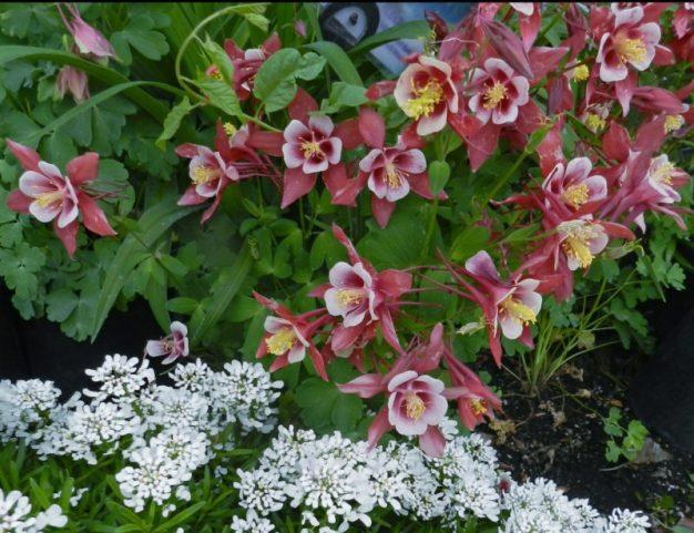 alkaline soils gardening