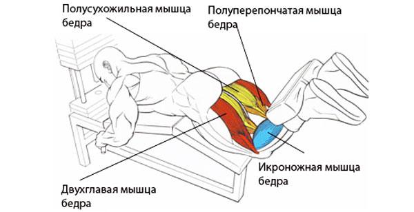 Сгибание ног в тренажере2