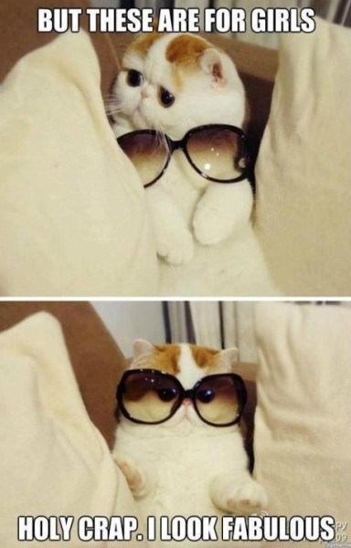 Cat Glasses copy