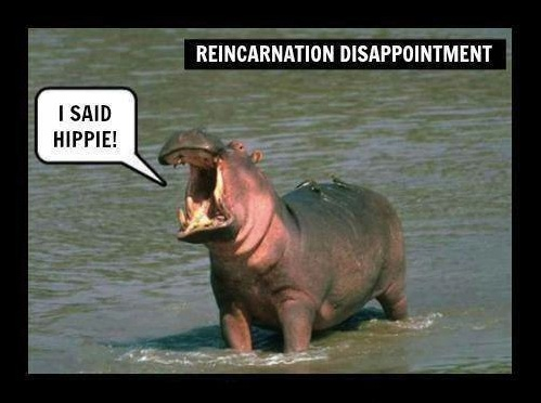 Hippei not Hippo copy