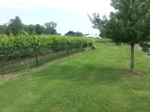 Outside Franklin at Armstead Vineyard
