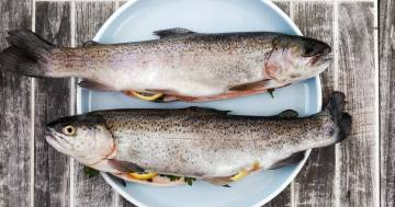 13 Gründe für Fischöl Beitragsbild 1170 x 650