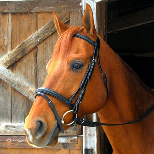 Exselle-DressageEventing-Bridle-0