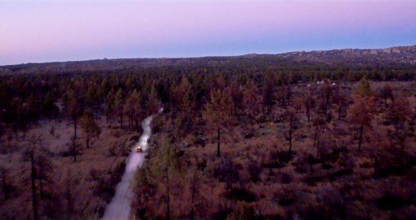 pine-forest-loop-baja
