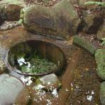 明治神宮「清正の井戸」のご利益や待ち受け画面にした効果とは?