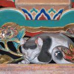 日光東照宮の眠り猫の場所とその歴史の伝説!裏側に隠された意味とは?